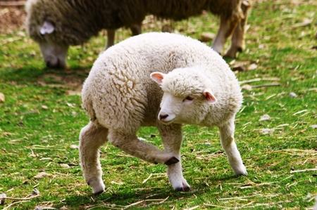 子羊さん.jpg